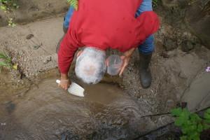 Prélèvement de la couche de surface des sédiments déposés dans le lit d'un ruisseau.